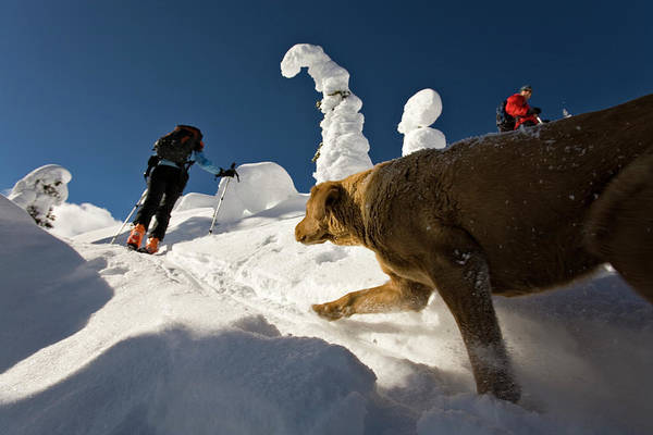 Jasmin Photograph - Two People And A Dog Ski Touring by Whit Richardson