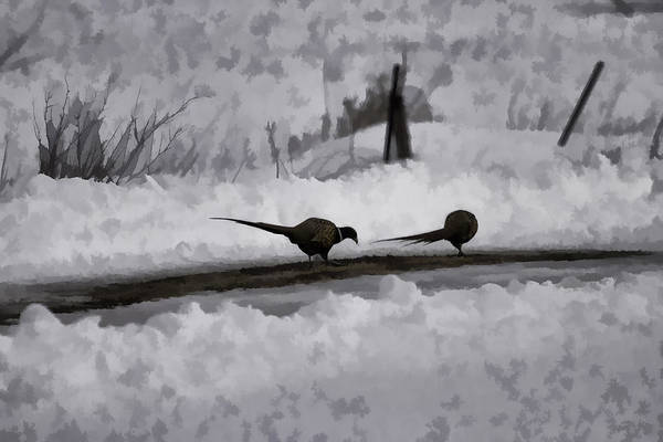Wall Art - Photograph - Two Pheasants by Thomas Young