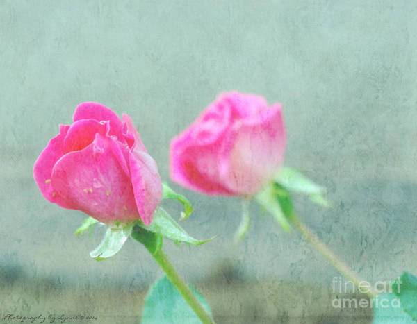 Photograph - Two Pink Roses by Gena Weiser