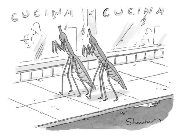 April 2nd Drawing - Two Praying Mantises Walk Together On The Street by Danny Shanahan