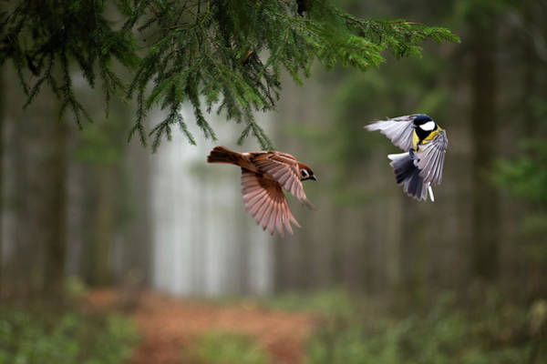 Flying Bird Photograph - Two by P?ter Bogn?r