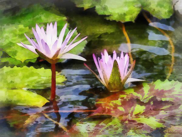 Photograph - Two Purple Water Lotus by Susan Savad