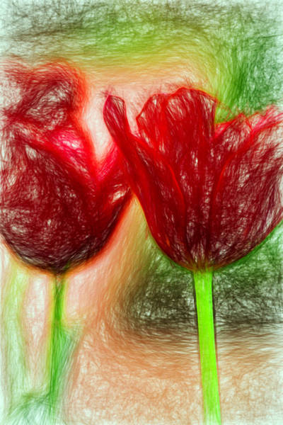 Photograph - Two Red Tulips Pencil by Rospotte Photography