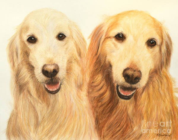 Pastel - Two Retrievers Painted by Kate Sumners