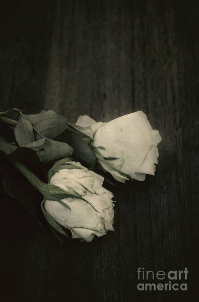 Photograph - Two Roses by David Lichtneker