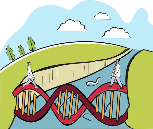 Wall Art - Photograph - Two Scientists Crossing A Dna Bridge by Fanatic Studio / Science Photo Library