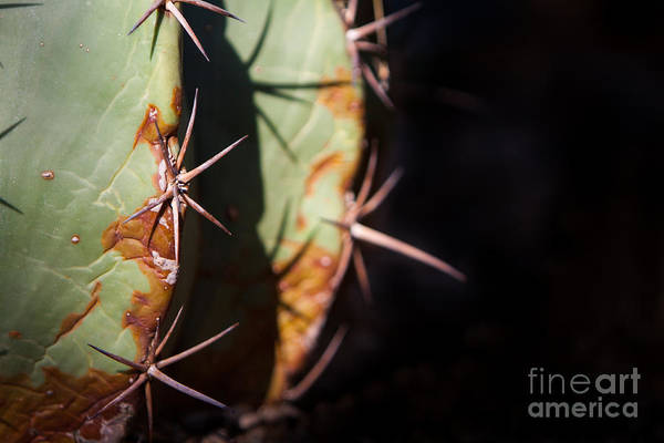 Art Print featuring the photograph Two Shades Of Cactus by John Wadleigh