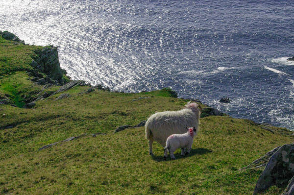 Donegal Digital Art - Two Sheep On The Cliffs At Sleive League - Donegal Ireland by Bill Cannon
