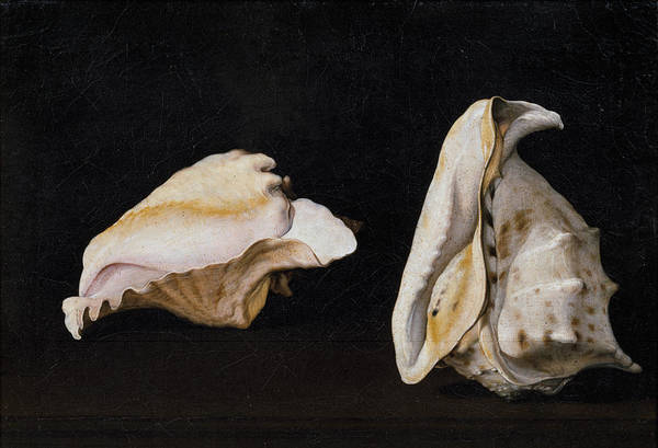 Wall Art - Painting - Two Shells by Filippo Napoletano