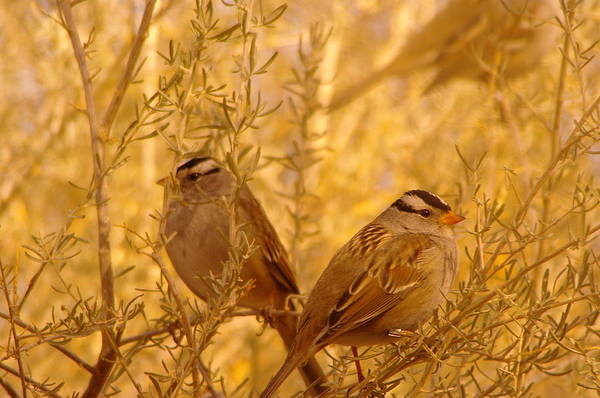 Little Things Photograph - Two Small Birds by Jeff Swan