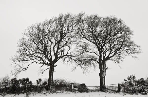 Photograph - Two Snowy Trees by Pete Hemington