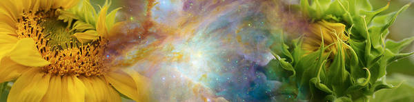 Concern Photograph - Two Sunflowers With Gaseous Nebula by Panoramic Images