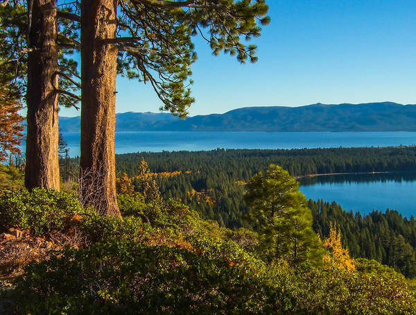 Fallen Leaf Lake Photograph - Two Trees Above Two Lakes by Marc Crumpler