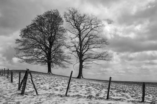 Photograph - Two Trees Bw by Jim Dollar