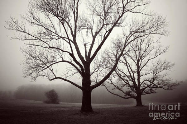 Photograph - Two Trees by David Gordon