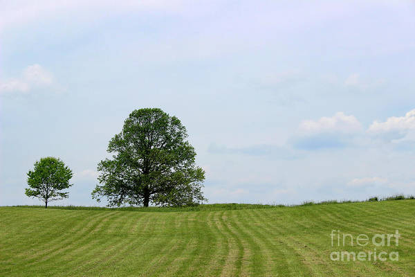 Photograph - Two Trees by Karen Adams