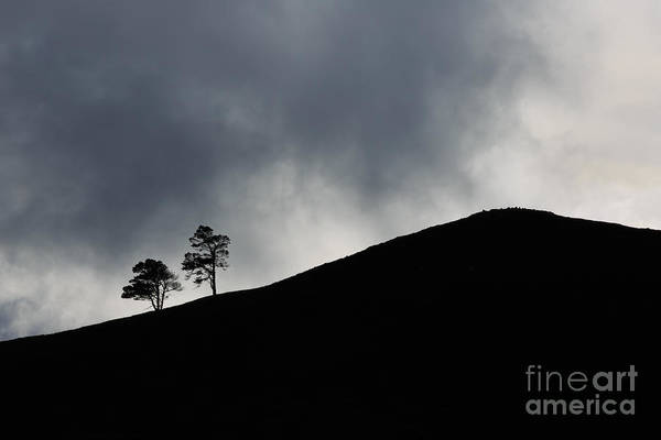 Wall Art - Photograph - Two Trees by Louise Heusinkveld