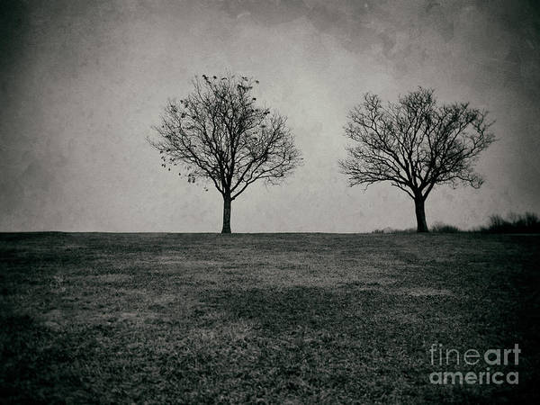 Photograph - Two Trees by Mark Miller