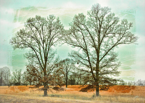 Photograph - Two Trees by Paulette B Wright