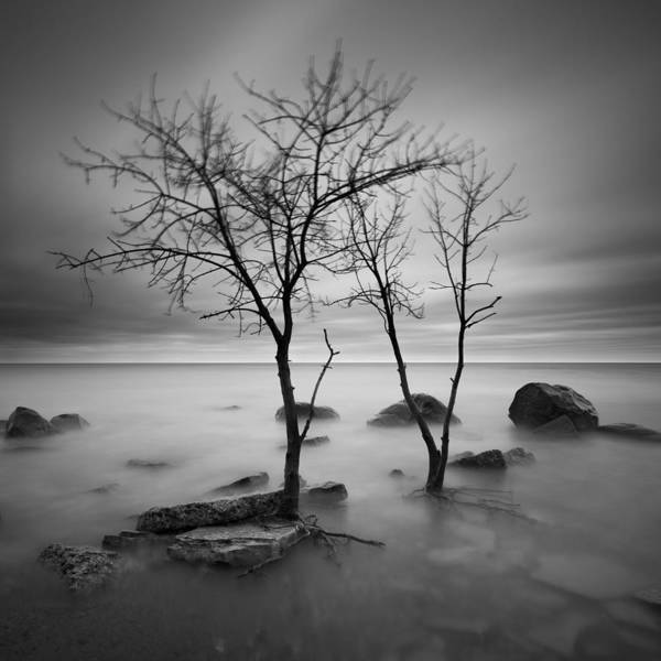 Photograph - Two Trees Walking by Josh Eral