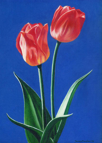 Painting - Two Tulips by Janice Dunbar