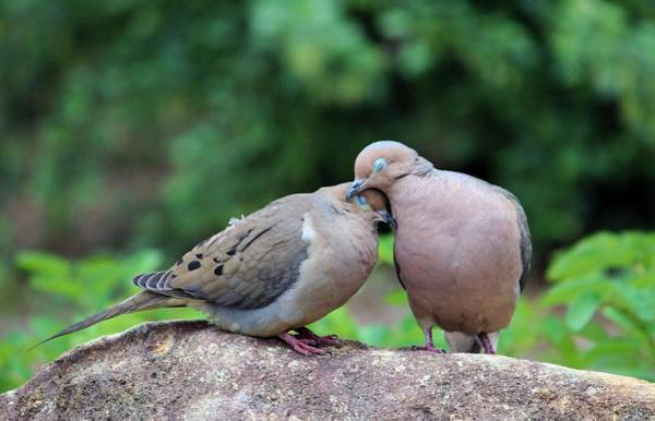 Two Birds Photograph - Two Turtle Doves by Cynthia Guinn