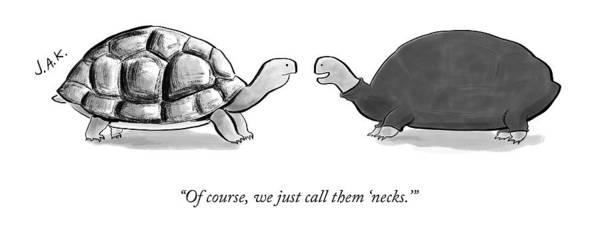 2016 Drawing - Two Turtles by Jason Adam Katzenstein