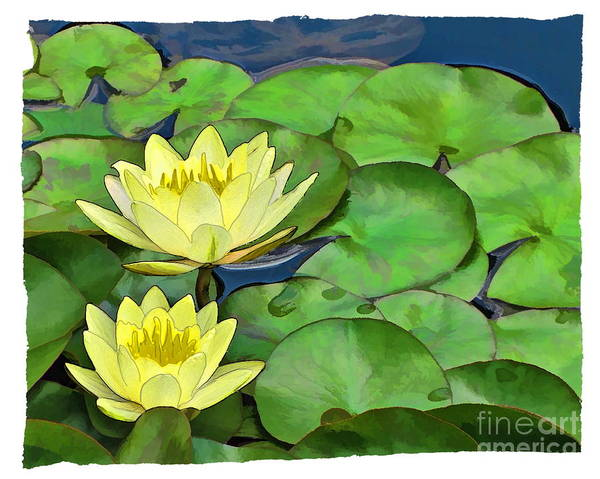 Lillypad Photograph - Two Water Lillies by Harold Bonacquist