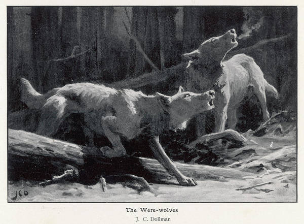 Wall Art - Drawing - Two Werewolves Howl  At The Full Moon by Mary Evans Picture Library