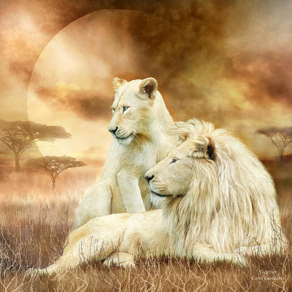 Mixed Media - Two White Lions - Together by Carol Cavalaris