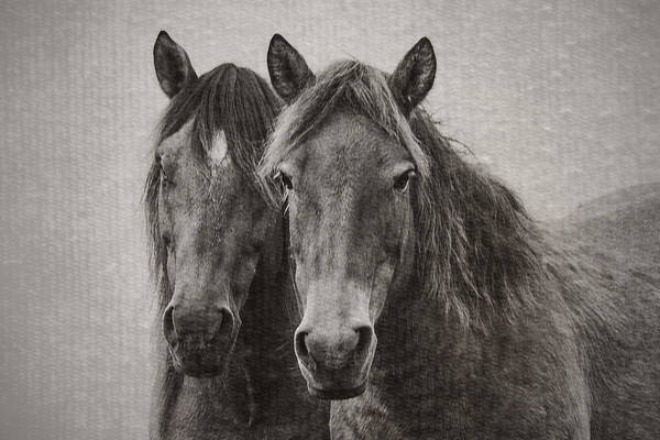 Photograph - Two Wild Horses by Bob Decker