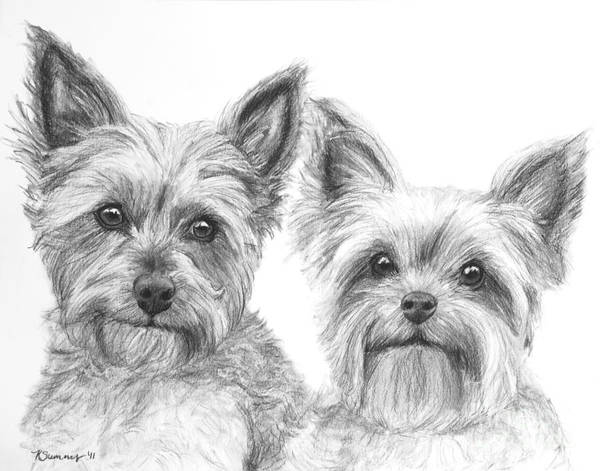 Art Print featuring the drawing Two Yorkshire Terriers In Charcoal by Kate Sumners