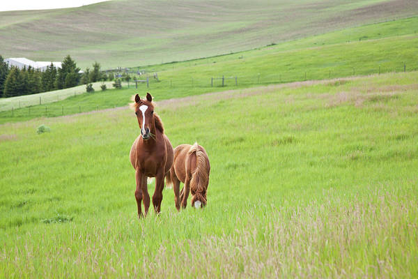 Photograph - Two Young Horses by Photos By By Deb Alperin