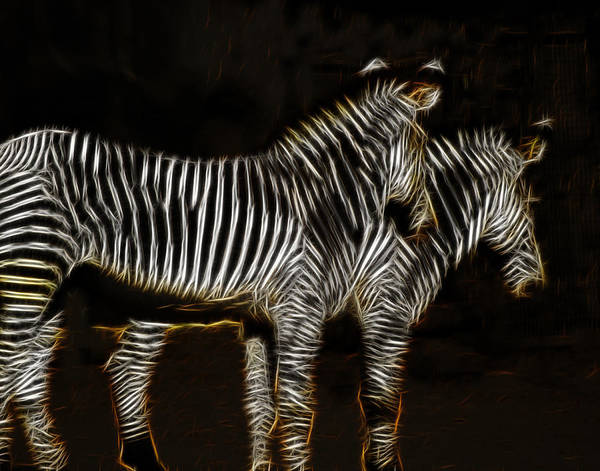 Photograph - Two Zebra Fractalius 2 by Maggy Marsh