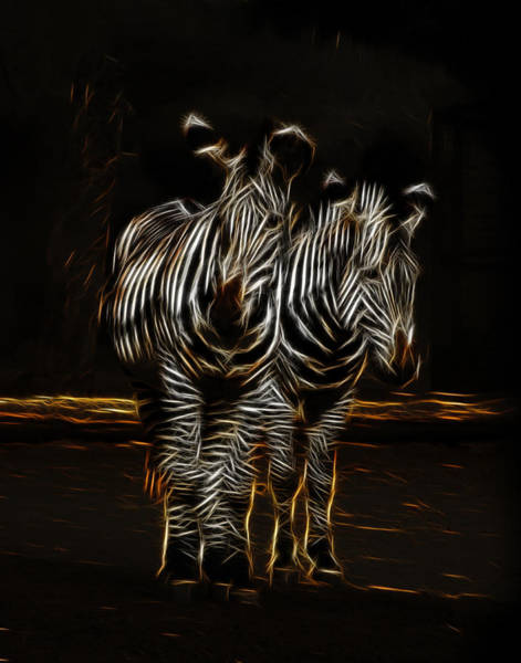Photograph - Two Zebra Fractalius by Maggy Marsh
