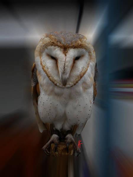 Photograph - Typo Alba Owl Spain  by Colette V Hera  Guggenheim