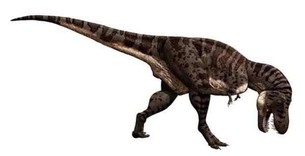 Rex Photograph - Tyrannosaurus Rex Dinosaur by Julius T Csotonyi/science Photo Library