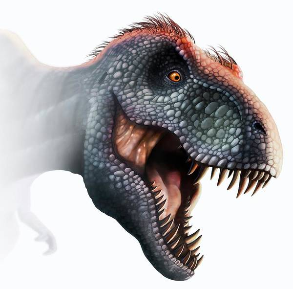 Scavengers Photograph - Tyrannosaurus Rex Head by Mark Garlick