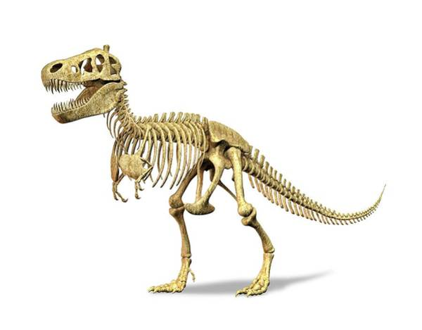 Prehistoric Era Wall Art - Digital Art - Tyrannosaurus Rex Skeleton, Artwork by Leonello Calvetti
