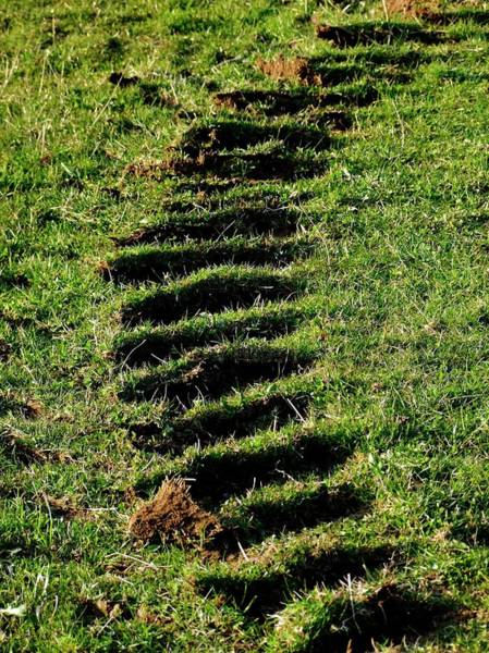 Tyre Wall Art - Photograph - Tyre Marks On Grass by Ian Gowland/science Photo Library