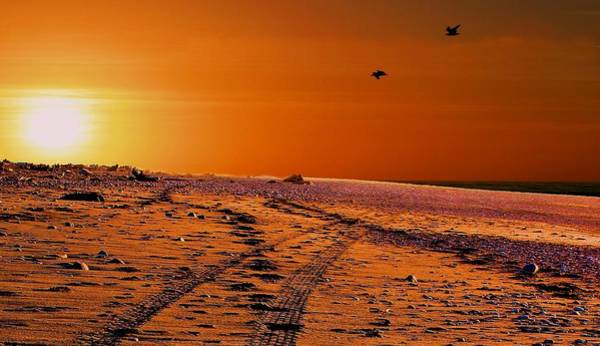Photograph - Tyre Tracks At Sunset by David Rich