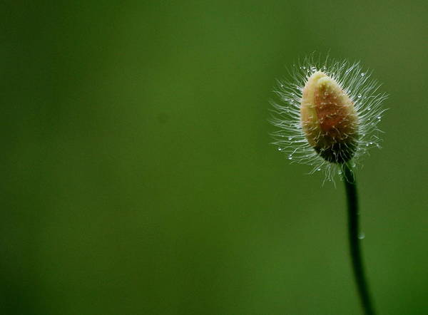 Brillante Photograph - Uggly Flower by HQ Photo
