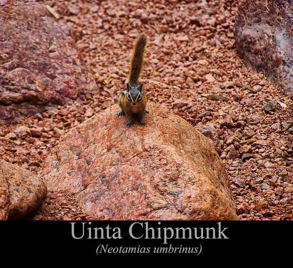 Digital Art - Uinta Chipmunk by Chris Flees
