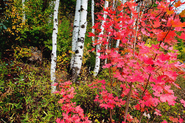 Shrubs Photograph - Uinta Colors by Chad Dutson