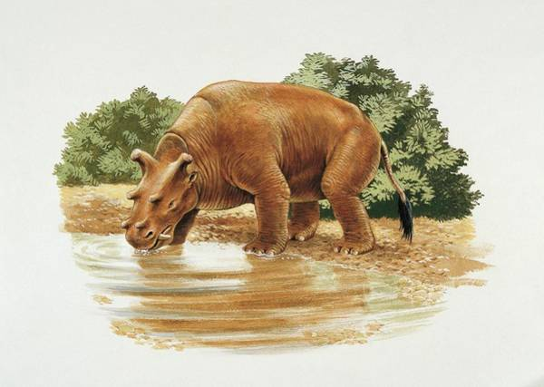Wall Art - Photograph - Uintatherium by Deagostini/uig/science Photo Library