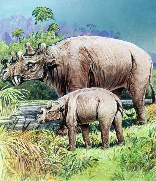Ungulate Wall Art - Photograph - Uintatherium by Michael Long/science Photo Library