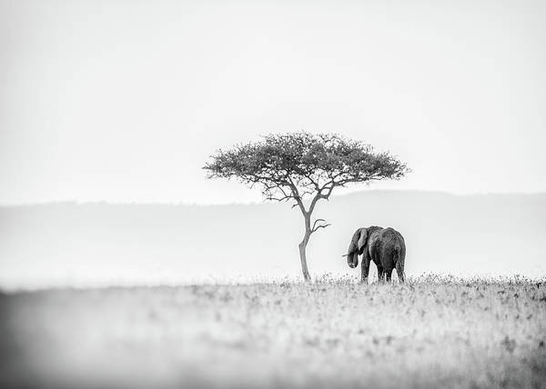 Kenya Wall Art - Photograph - Umbrella Thorn by Jaco Marx