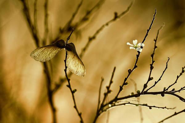Branch Photograph - Un Altra Storia by Fabien Bravin