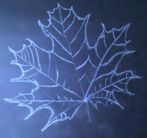 Mathematics Drawing - Uncertaintys Leaf by Jason Padgett