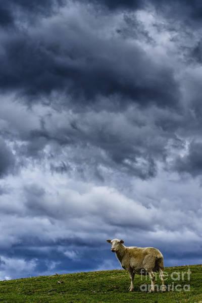 Photograph - Under A Leaden Sky by Thomas R Fletcher
